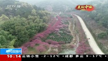 """长脸了!长兴万亩红梅花""""开""""到央视,惊艳全中国!"""