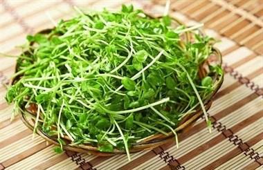 春天里的长寿菜、大补菜、降脂菜,初春一定要多吃!