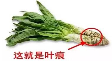 """很多人老吃这种菜,都不知道它是""""千金菜""""!太可惜啦"""