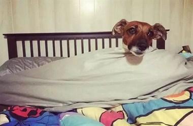 """想跟你说个""""早安""""的狗狗们"""