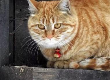 物业养鸽子扰民,居民无奈祭出大橘猫反击…