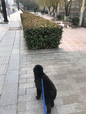 哪位好心人捡到我的狗狗了?