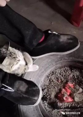 小猫咪看到主人在烤火,也凑过来伸手烤一烤,烤热和了还揣一揣!