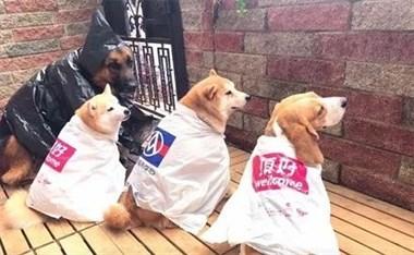 主人用购物袋给4只狗做了雨衣,网友笑称:黑色那套最实用!