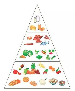 坚持减脂却越减越肥?你需要先了解这些……