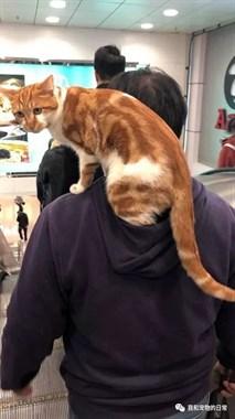 网友在商场看到一位男子这样遛猫,太酷了吧!