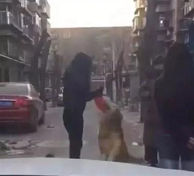 网友回家路上忽然被一只金毛扑倒,仔细一看原来是她5年前走丢的狗狗