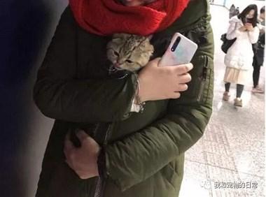第一次带猫咪出门去超市,将它裹在衣服怀里既好奇又害怕,超惹人疼!