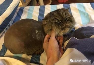 饼饼好香,囧脸猫想要又不敢要,反复伸手萌炸全网~