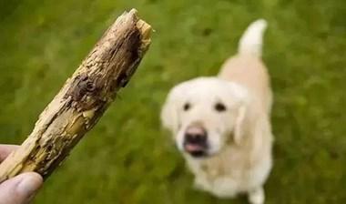 和狗狗玩捡树枝游戏,可这货叼回来的东西却让人笑喷了......