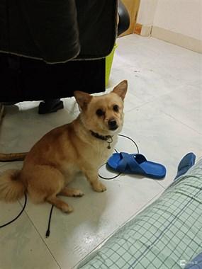 免费送一只非常忠臣、聪明的狗狗!