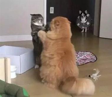 家里两只猫打得正激烈,狗子突然闯入,场面很尴尬…