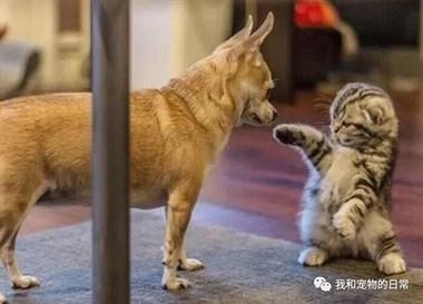猫咪被不喜欢的狗狗亲了一口,于是追着狗狗一顿揍,哼臭流氓!