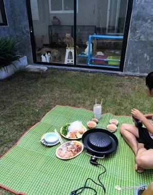 主人在院子里烤肉吃,家里的猫咪们隔着玻璃看得眼睛都绿了!