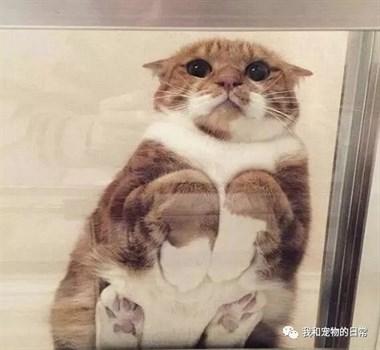 从玻璃底下看猫咪的睡姿,真是莫名的疗愈,好想吸一口!