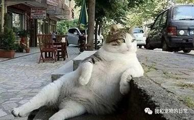 这些猫咪耍起帅来,真没霸道总裁什么事……瞧这霸气坐姿!