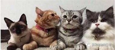 主人给4只猫咪一起拍照,橘猫一点都不安分,亲完这个搂那个!