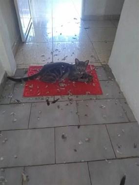 网友回家看到满地的鸟毛,猫还趟在中间,这是一桩惨案!!