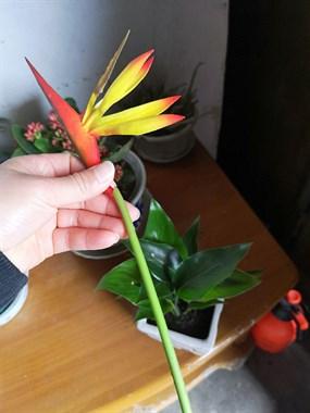 无良商家坑蒙拐骗!老人买了三盆花 居然是假的!