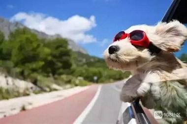 抱两条狗开奔驰,女子还狡辩:哪条法律规定开车不能抱狗?