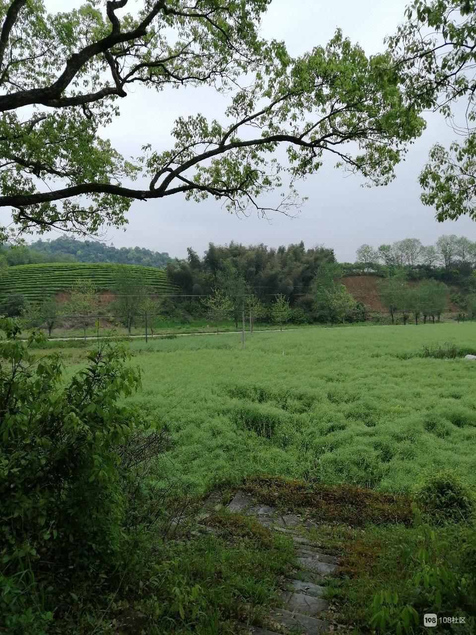四月的郊外 空气清新 满眼绿色!