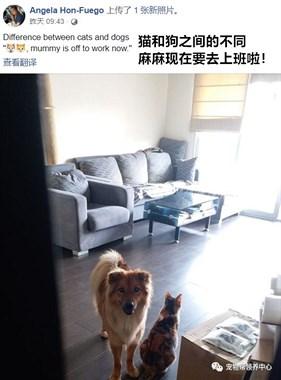 麻麻上班喽!一张照片晒出养猫养狗的区别......