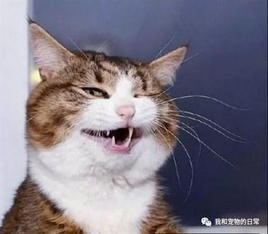 这是我见过表情最丰富的喵,已成猫中戏精了!