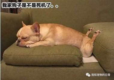 网友家的狗子是不是坏了,各种沙雕坐姿令人笑喷!