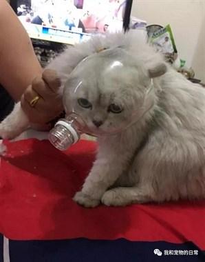 猫咪剪指甲的时候总是不配合,用了这个办法突然变得乖巧!