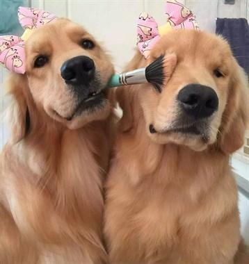 狗子竟然是动物界中公认的醋坛子,为了争宠它们什么都做得出来!
