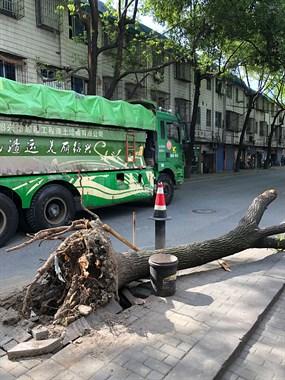 绍兴状元新村发生车祸,树没挺过去,被连根拔起…