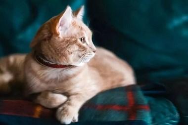 原来猫不知道自己是男是女啊!
