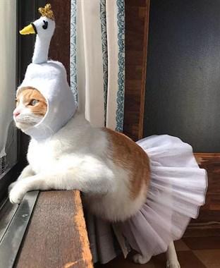 猫和白天鹅之间的距离,只隔了一件衣服...