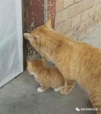 发现一只实力坑娃的猫妈:老妈我还没进去啊,快出来开门!
