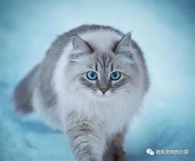 猫咪在野外拍的雪景照太美了,简直是神仙猫咪啊!