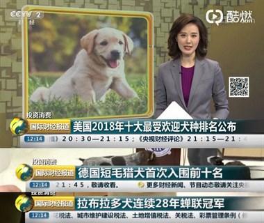 2018美国最受欢迎的狗狗已公布,你们猜猜谁是冠军?