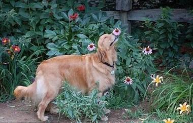 【来问】遛狗的时候,不要再阻止狗狗闻嗅啦