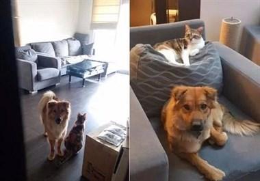 妈妈去上班拍下毛孩模样,这张图看出猫与狗的差别