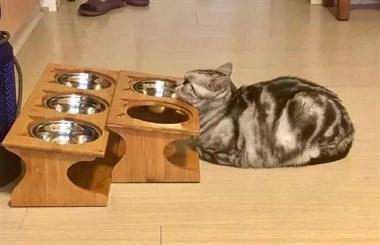 网友家的猫明明刚吃过饭,可没过一会,它就会摆出这样的姿势…
