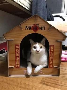 主人精心为猫打造了一个猫屋,猫看起来也很喜欢,没想到的是…