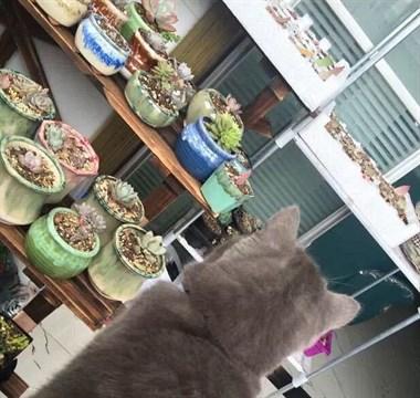 一场灾难即将爆发!你的多肉正在被猫咪暗中观察!