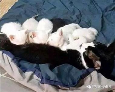 猫妈妈生了一窝小奶猫,尴尬的是,没有一只像爸爸!