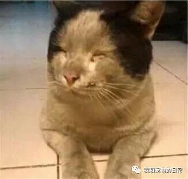 猫咪消失一天回来成了这副模样,应该是掉到煤坑里才爬出来!