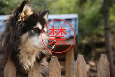重磅!最严养犬管理条例!一家只能养一条狗…这些都要被罚!