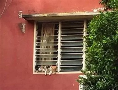 网友无意中发现,对面窗台有两只猫在盯着自己,仔细一看原来…