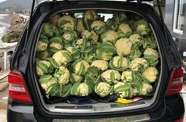 临城汉子开着奔驰卖花菜,只因一心想要当农夫
