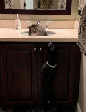 主人带了一只狗回家,猫见了吓得躲进这里,说啥也不肯出来…
