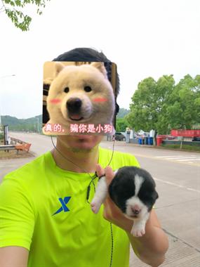 路边捡的小狗不知道什么品种?