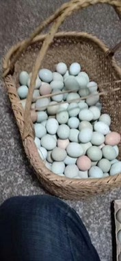 土鸡蛋和乌鸡蛋