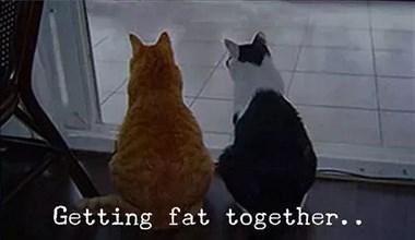 """橘猫:""""我爱你就是要和你一起变胖!"""""""